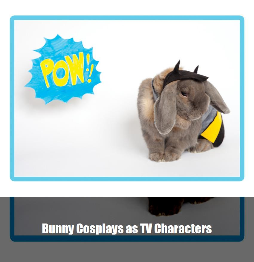 Bunny Cosplays As Tv Characters 2