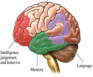 New Gene Therapy May Help Alzheimer Patients - Gene Therapy Prevents Memory Problems In Mice With Alzheimer